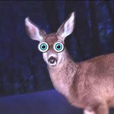 Reaction - Deer